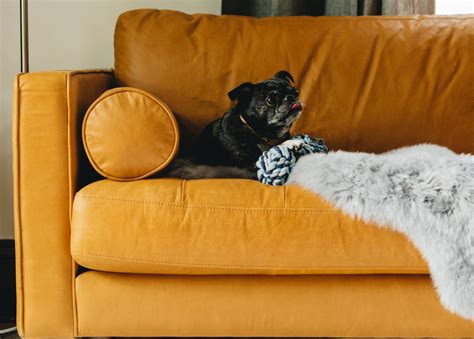 dog friendly couch 5 tips for choosing pet friendly furniture articulate