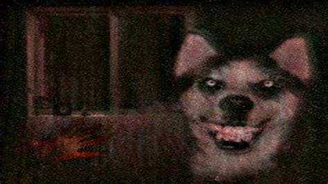 imagenes de smiledog jpg quien es smile dog youtube