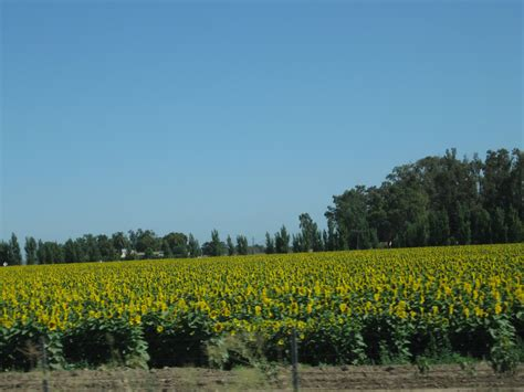sunflower field off route 15 in northern new jersey near sparta california aaroads northbound interstate 5 yolo county