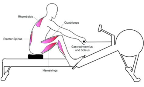 rowing machine diagram rowing for effective and faster weight loss try it now