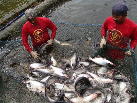 Udang Pakan Ikan pakan ikan gpmt