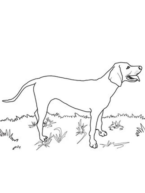 coloring pages of coon dogs redbone coonhound coloring pages and coloring on