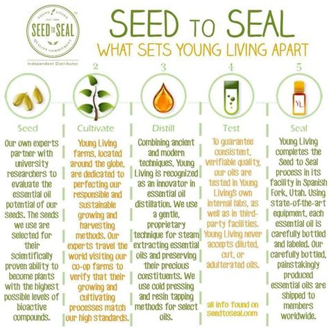 google images young living essential oils 25 best ideas about young living business on pinterest
