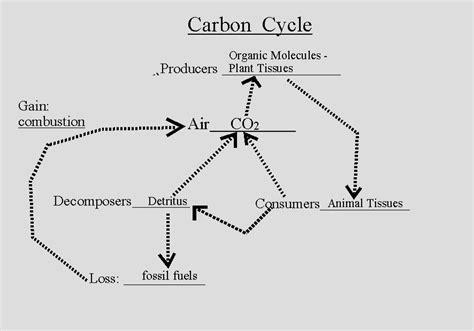 flow diagram of carbon cycle carbon cycle handout new calendar template site