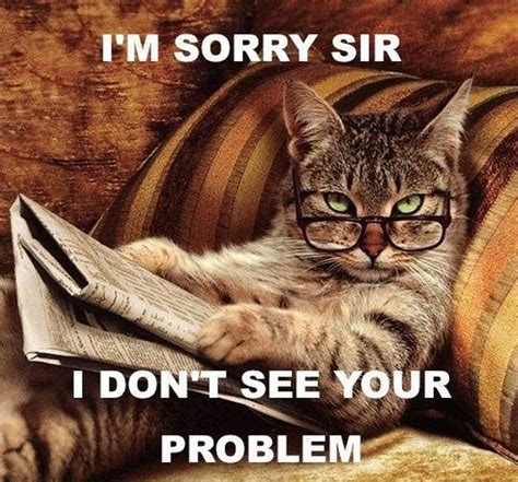 Cats Memes - cat memes damn cool pictures