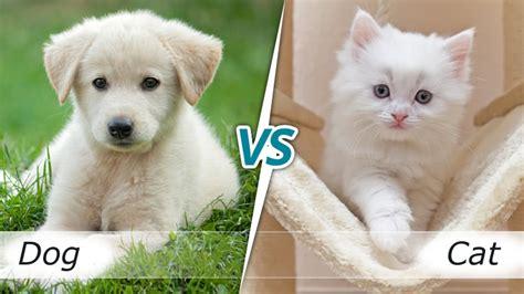 cat or survey cat or