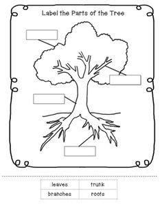 Parts of a Tree Worksheet | Tree study, Preschool