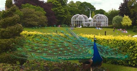 Birmingham Botanical Gardens by Visit A Bounty Of Gardens In The West Midlands