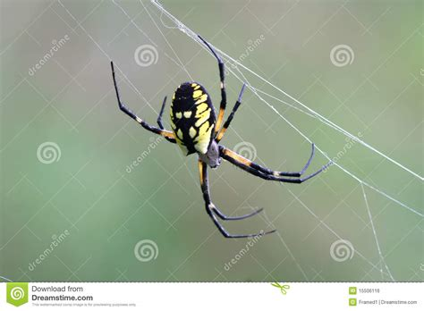 spider with yellow pattern on back black yellow garden spider royalty free stock image