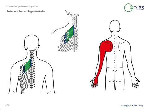 Nacken Schulter by Erfreut Schulter Nackenmuskulatur Fotos Anatomie Ideen