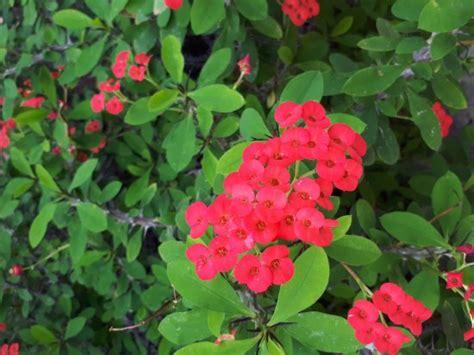 garten chemnitz botanischer garten chemnitz изображение botanischer