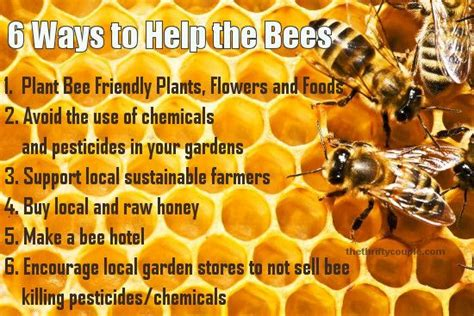 the bee friendly garden easy ways to help the bees and make your garden grow books 6 ways to help save the bees tips for