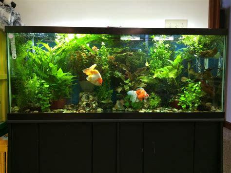 light for 30 gallon aquarium 30 gallon planted aquarium aquarium design ideas