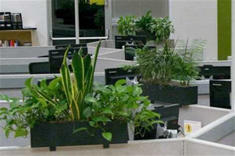 Cubicle Planters by Leasing Indoor Plants Plant Friends Llc
