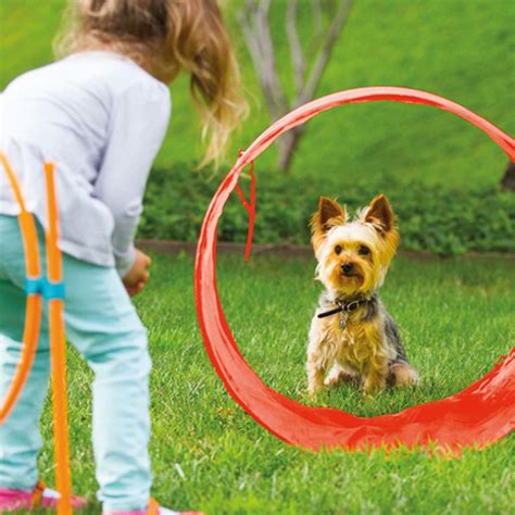 backyard toys for dogs shop dogs toys interactive zip zoom outdoor