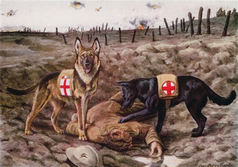 war dogs tasmanian lighthorse dogs in ww1