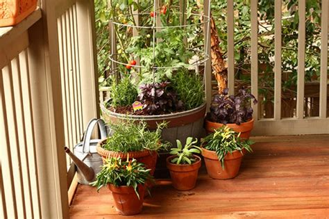 how to grow a herb garden in pots what can i grow in a pot bonnie plants