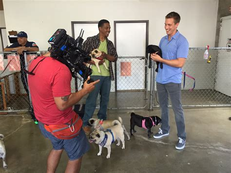 how to adopt a pug how to adopt a pug join the mission and help save our shelter