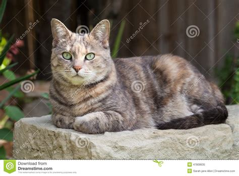 the bench com tortoishell tabby cat sitting on garden bench with paws