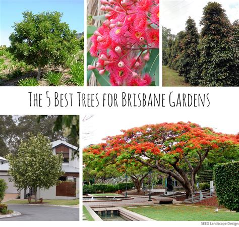 the 5 best trees for brisbane gardens seed landscape design