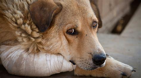 imagenes de animales maltratados los sin voz el maltrato animal la huella digital