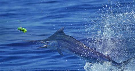 charter boat fishing exmouth exmouth fishing charters no 1 fishing charter boat