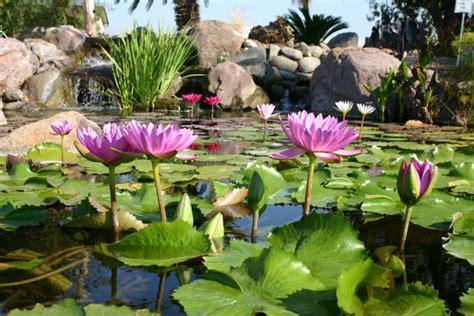 imagenes de jardines acuaticos estanques de jard 237 n en m 233 xico paisajismo