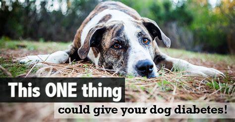 canine diabetes       prevent