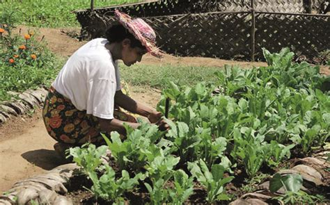 Home Vegetable Garden In Sri Lanka Poverty Free Sri Lanka By 2015 Is It A Or A