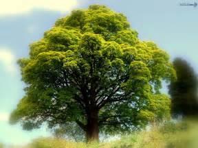 best trees image wallpapers best tree nature wallpaper