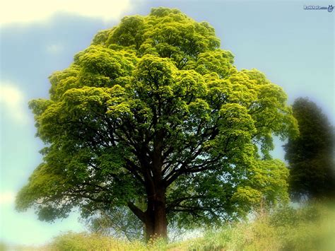 best tree image wallpapers best tree nature wallpaper