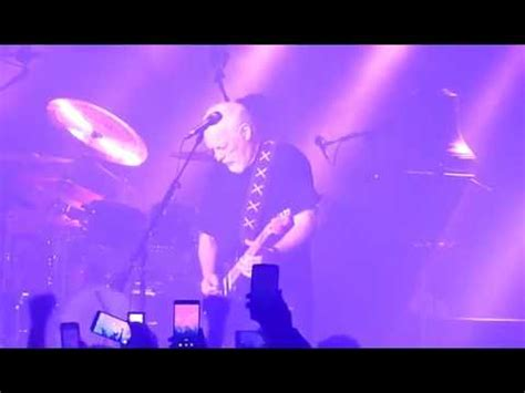 comfortably numb live david gilmour pictures latest news videos and dating gossips