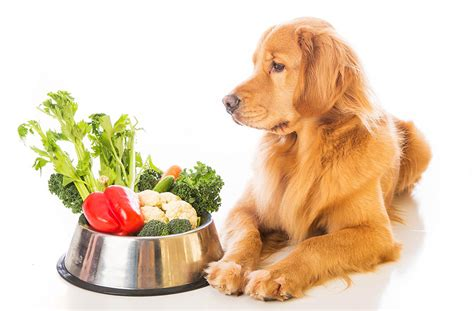 dietas para adelgazar con whey protein y metformina que ejercicio es mejor para quemar grasa abdominal dieta