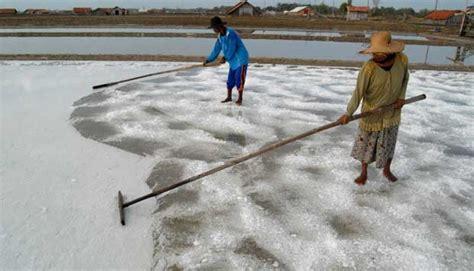 Garam Australia lamongan tolak impor garam australia oleh pemda jatim bisnis tempo co