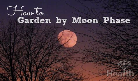Gardening By The Moon by Images Planting By Moon New Calendar Template Site