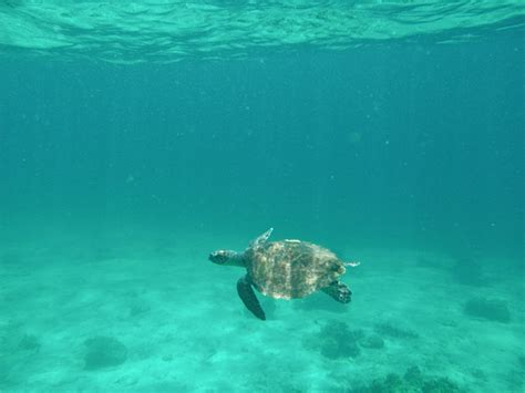 dive koh lipe diving koh lipe thailand koh lipe castaway divers