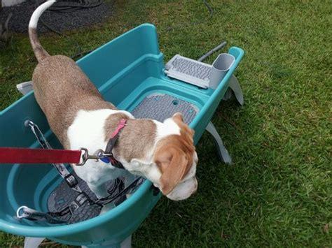 raised dog bathtub so what are the options throw the bathtub away taking