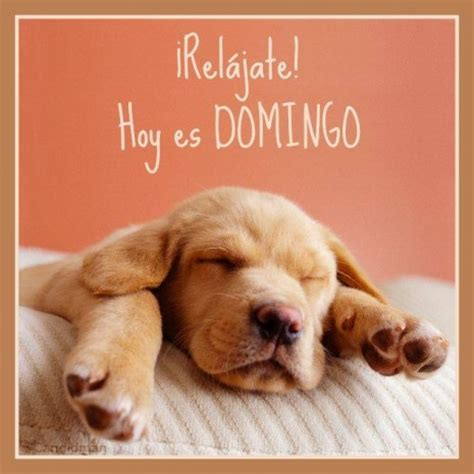Imagenes Feliz Domingo Con Animales | bienvenido domingo el domingo es para descansar im 225 genes