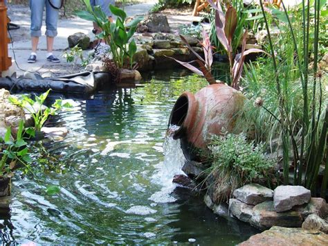 Gallery Gt Water Hyacinth Pond Backyard Ponds Ideas The Gallery For Gt Water