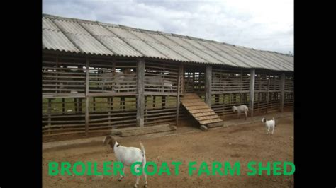 broiler goat shed india youtube