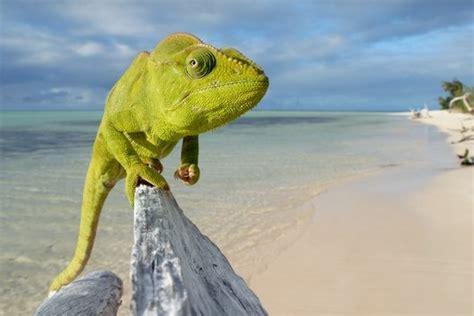 lucertole volanti lucertole caimani coccodrilli serpenti e tartarughe le