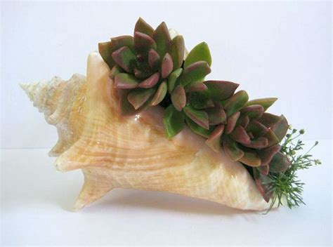 Seashell Planters by Reserved For Evelynbarbara1 Succulent Garden Seashell
