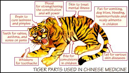 Exotic Animal Rugs An Insight To The Exotic Animal The Tiger