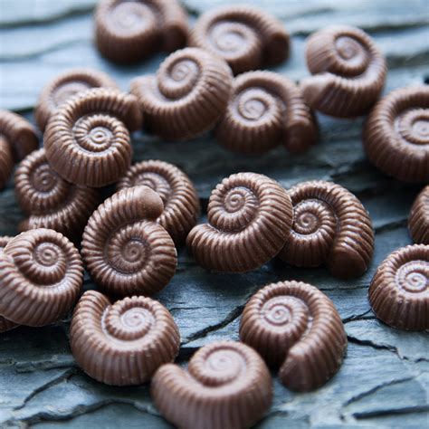 Time Bites by Chocolate Ammonites Time Bites Chocolate Fossils