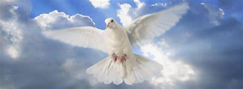 imagenes de palomas blancas de la paz la paloma del espiritu related keywords la paloma del
