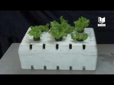 membuat hidroponik sistem wick video cara membuat sistem hidroponik wick styrofoam youtube