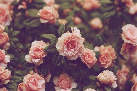 Vintage Flower Wallpaper   QyGjxZ