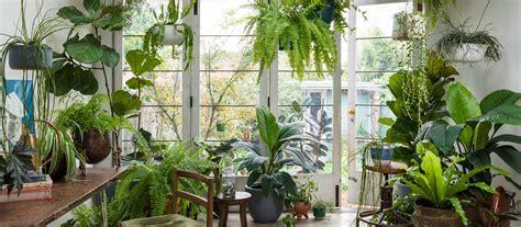 planthunter max   plant life balance