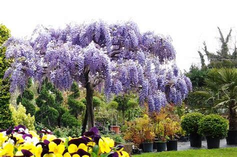 immagini di fiori e piante immagini di confezioni di piante e fiori idee per