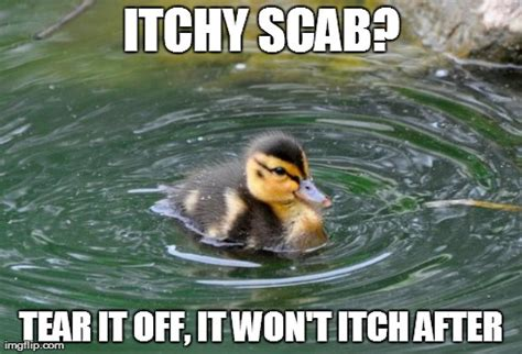 Advice Mallard Meme Generator - image tagged in child advice mallard imgflip